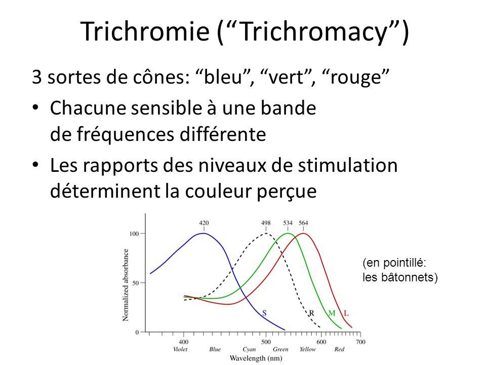 Trichromie ( Trichromacy )