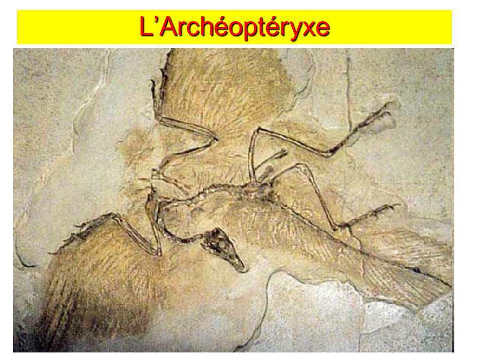 L'Archéoptéryxe