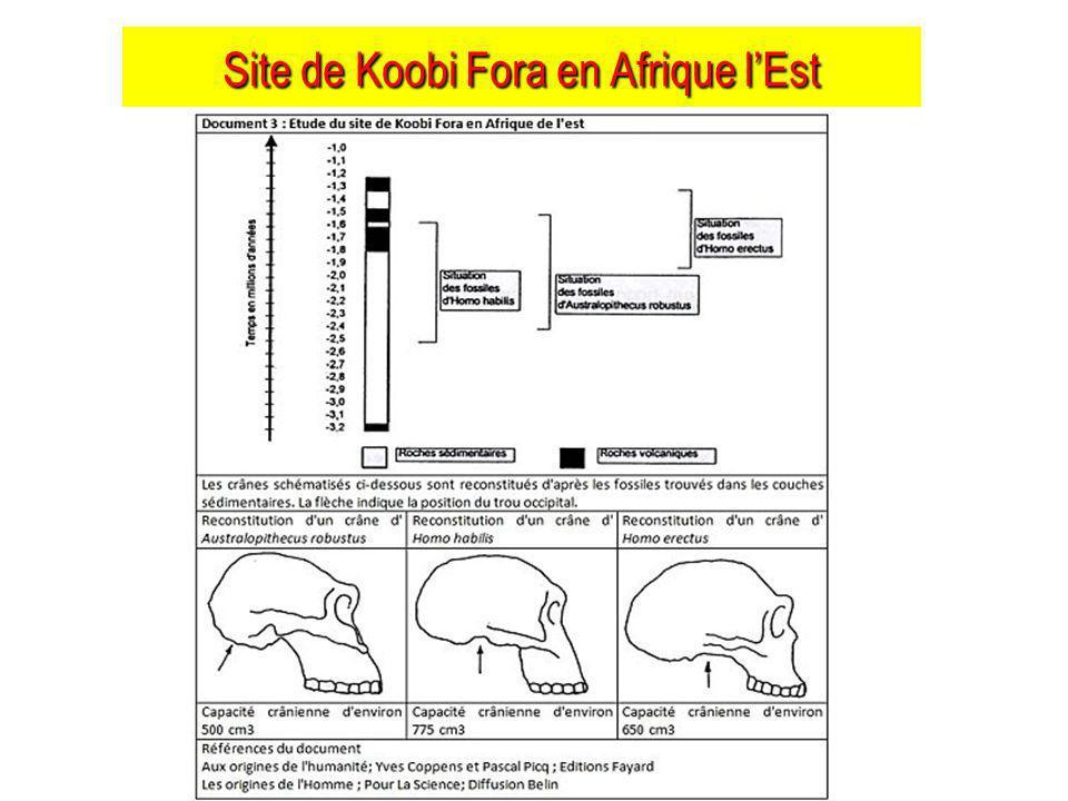 Site de Koobi Fora en Afrique l'Est
