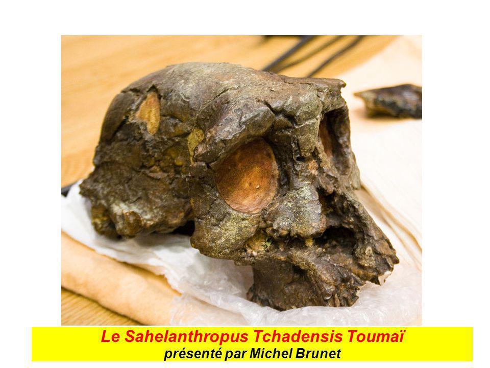Le Sahelanthropus Tchadensis Toumaï présenté par Michel Brunet