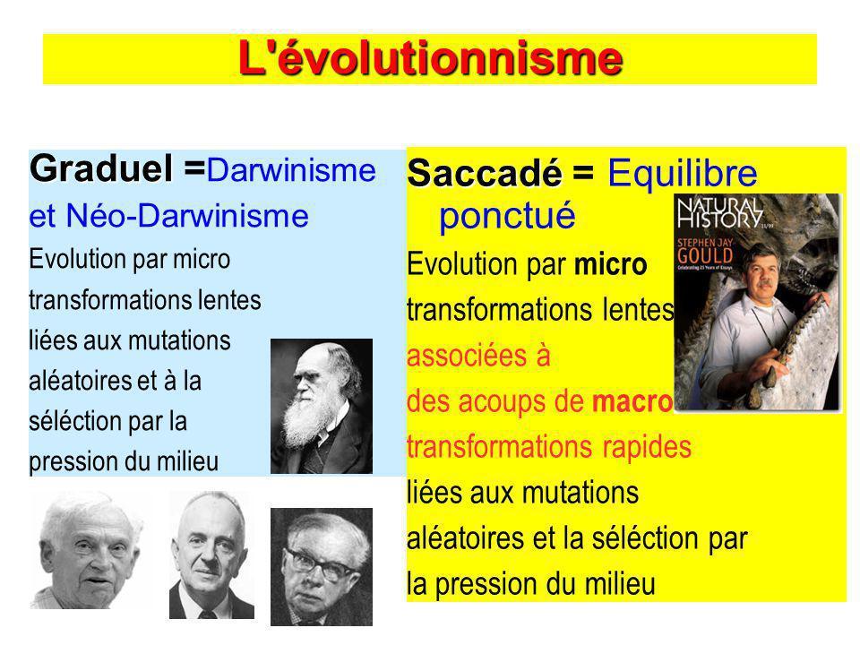 L évolutionnisme Graduel =Darwinisme Saccadé = Equilibre ponctué
