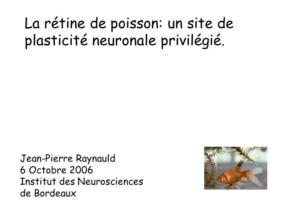 La rétine de poisson: un site de plasticité neuronale privilégié.