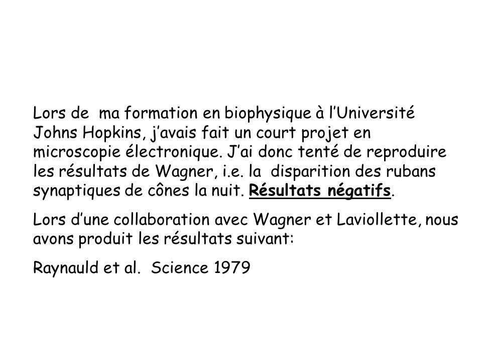 Lors de ma formation en biophysique à l'Université Johns Hopkins, j'avais fait un court projet en microscopie électronique. J'ai donc tenté de reproduire les résultats de Wagner, i.e. la disparition des rubans synaptiques de cônes la nuit. Résultats négatifs.