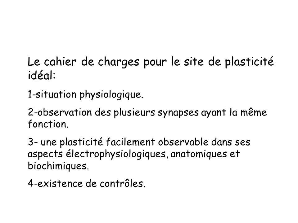 Le cahier de charges pour le site de plasticité idéal: