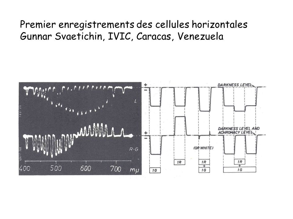 Premier enregistrements des cellules horizontales Gunnar Svaetichin, IVIC, Caracas, Venezuela