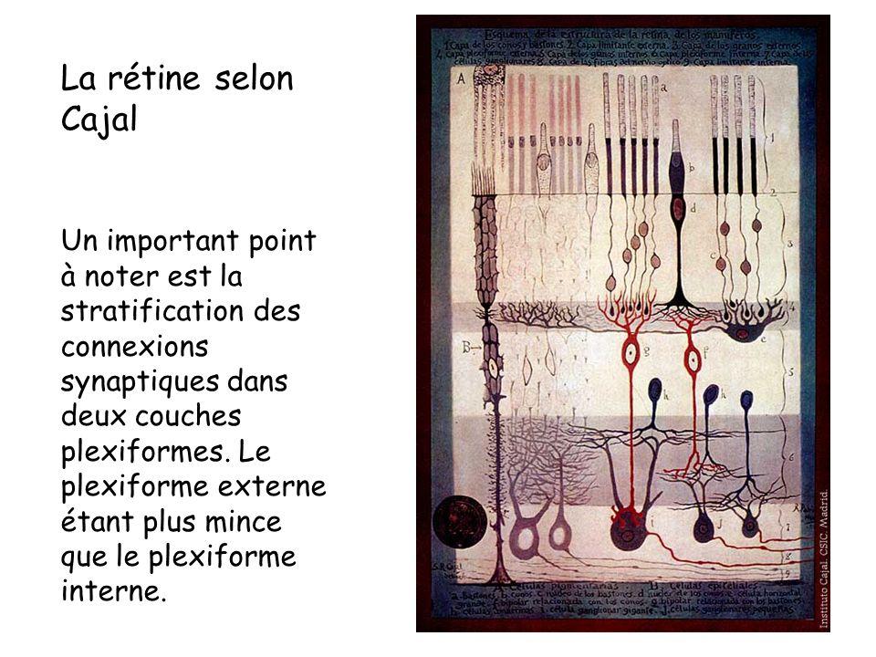 La rétine selon Cajal
