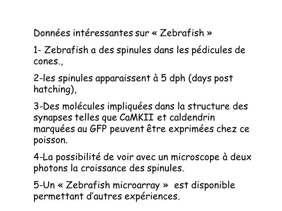 Données intéressantes sur « Zebrafish »