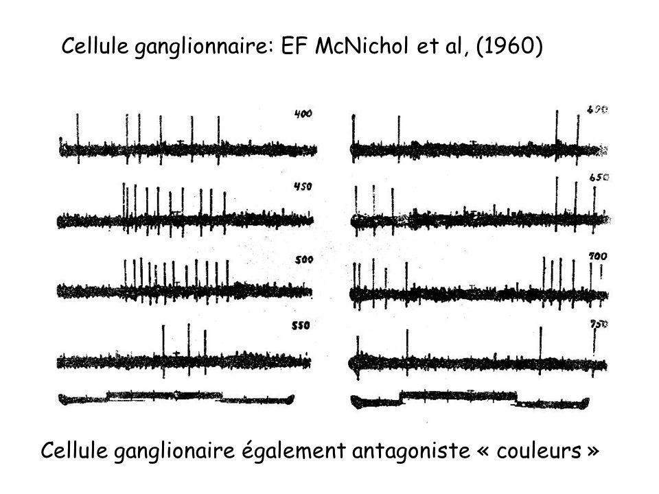 Cellule ganglionnaire: EF McNichol et al, (1960)