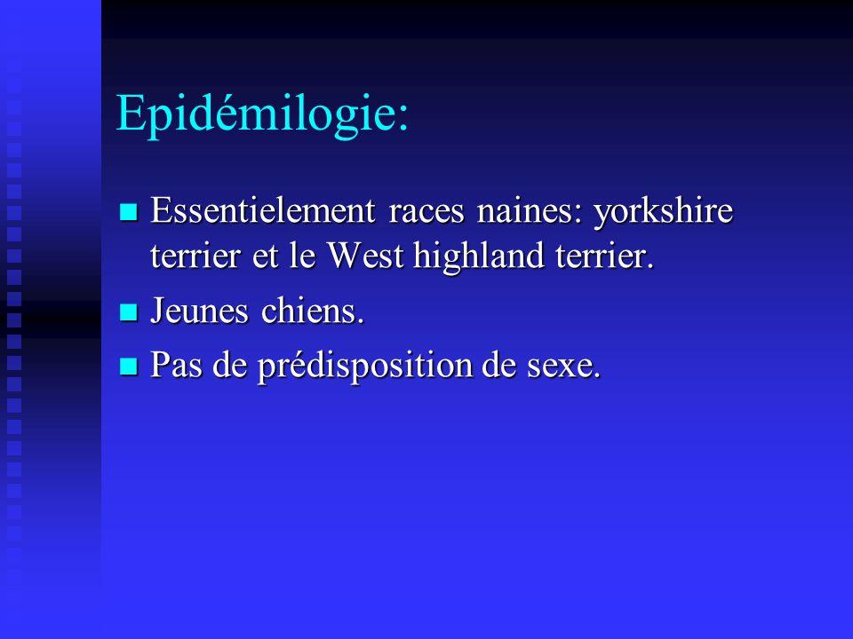 Epidémilogie: Essentielement races naines: yorkshire terrier et le West highland terrier. Jeunes chiens.