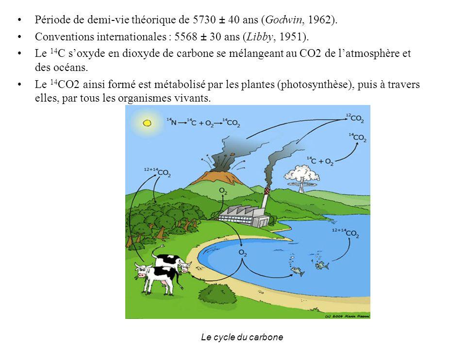 Période de demi-vie théorique de 5730 ± 40 ans (Godwin, 1962).