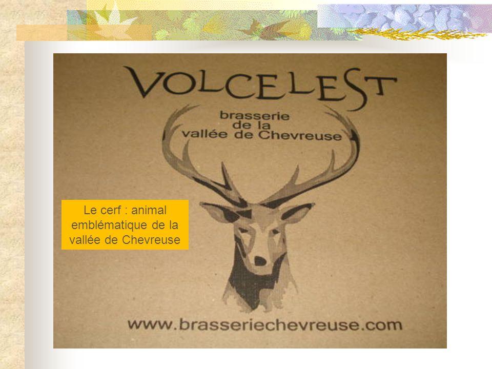 Le cerf : animal emblématique de la vallée de Chevreuse