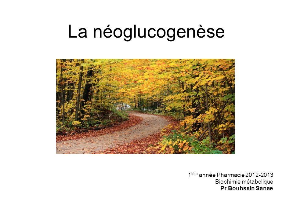 La néoglucogenèse 1ière année Pharmacie 2012-2013