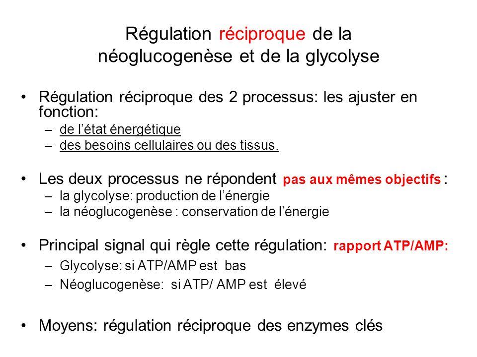 Régulation réciproque de la néoglucogenèse et de la glycolyse