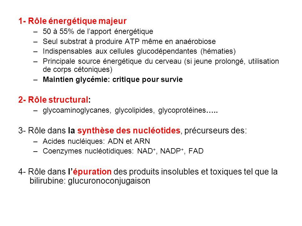 1- Rôle énergétique majeur