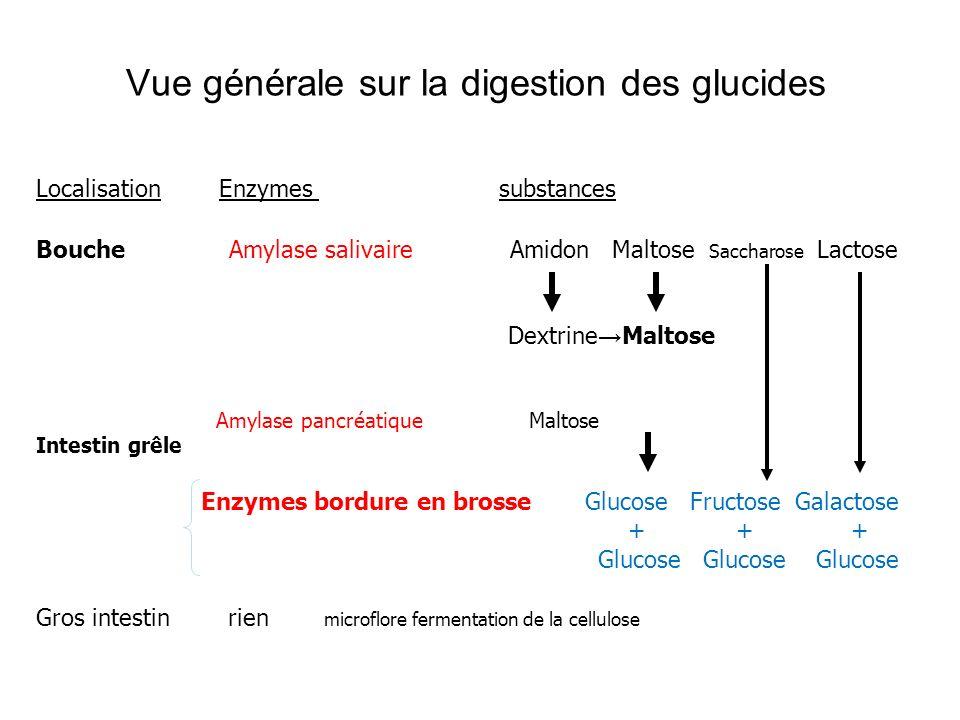Vue générale sur la digestion des glucides
