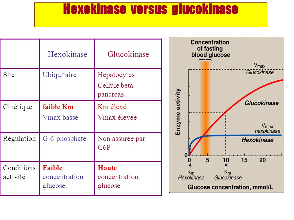 Hexokinase versus glucokinase