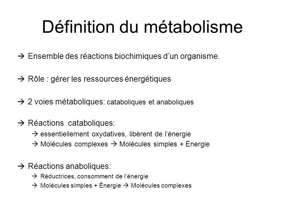 Définition du métabolisme