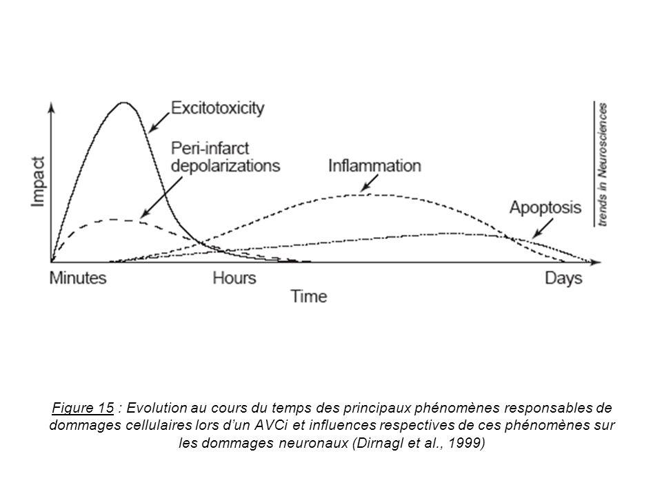 Figure 15 : Evolution au cours du temps des principaux phénomènes responsables de dommages cellulaires lors d'un AVCi et influences respectives de ces phénomènes sur les dommages neuronaux (Dirnagl et al., 1999)