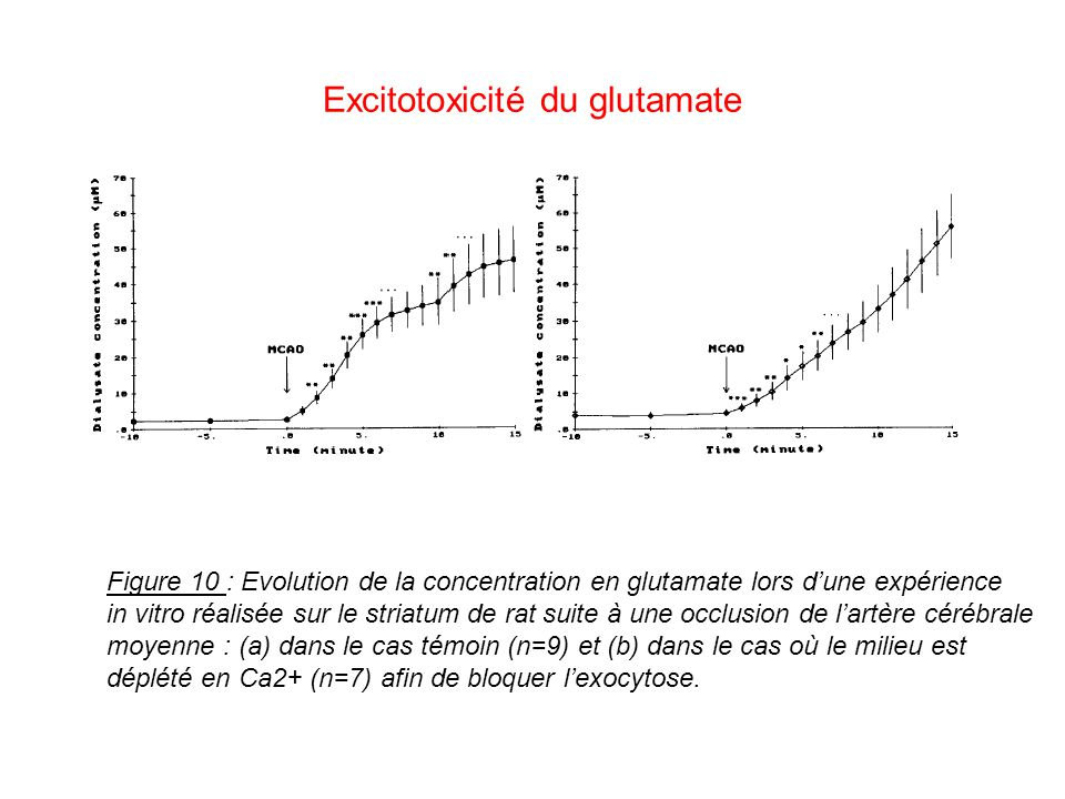 Excitotoxicité du glutamate