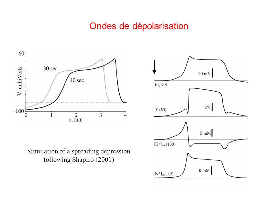 Ondes de dépolarisation