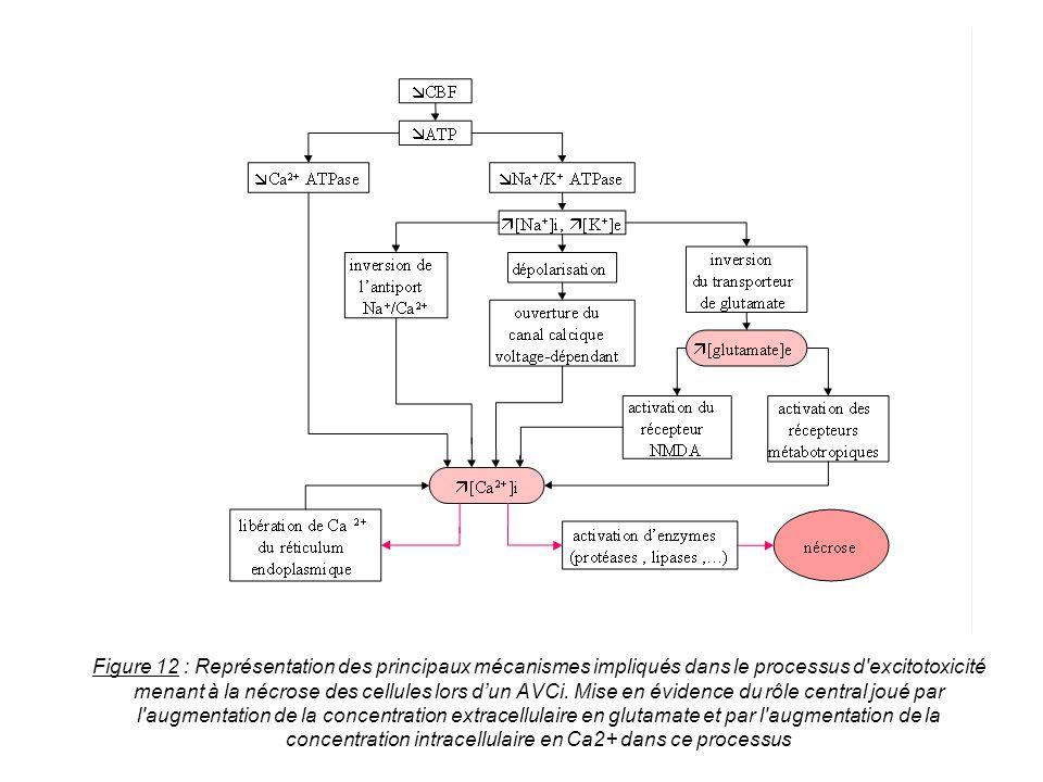Figure 12 : Représentation des principaux mécanismes impliqués dans le processus d excitotoxicité menant à la nécrose des cellules lors d'un AVCi.