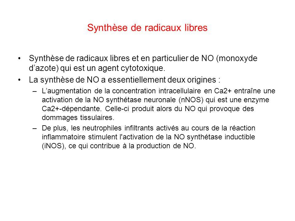 Synthèse de radicaux libres