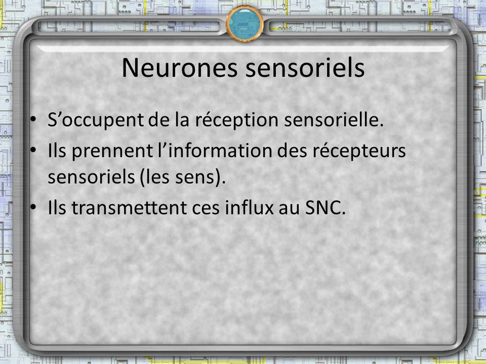 Neurones sensoriels S'occupent de la réception sensorielle.