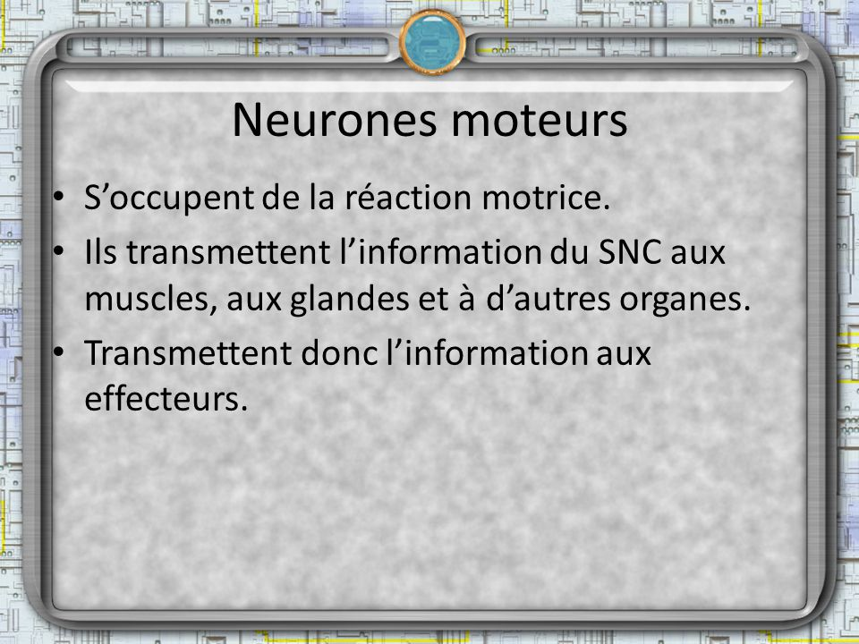 Neurones moteurs S'occupent de la réaction motrice.