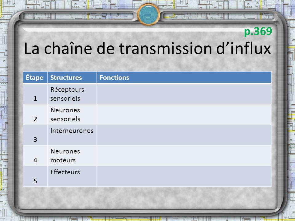 La chaîne de transmission d'influx