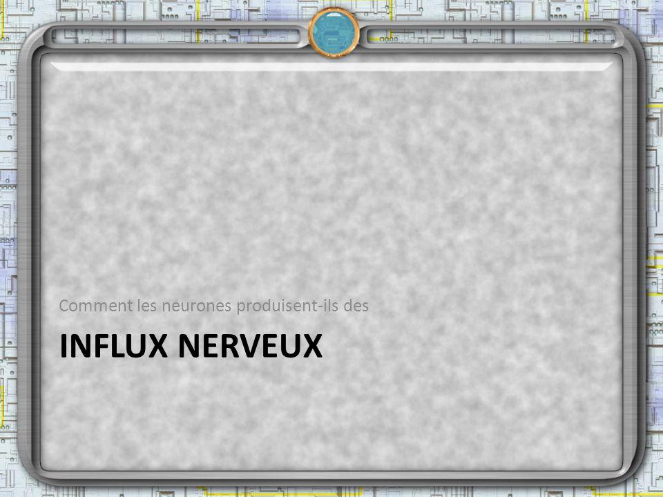 Comment les neurones produisent-ils des