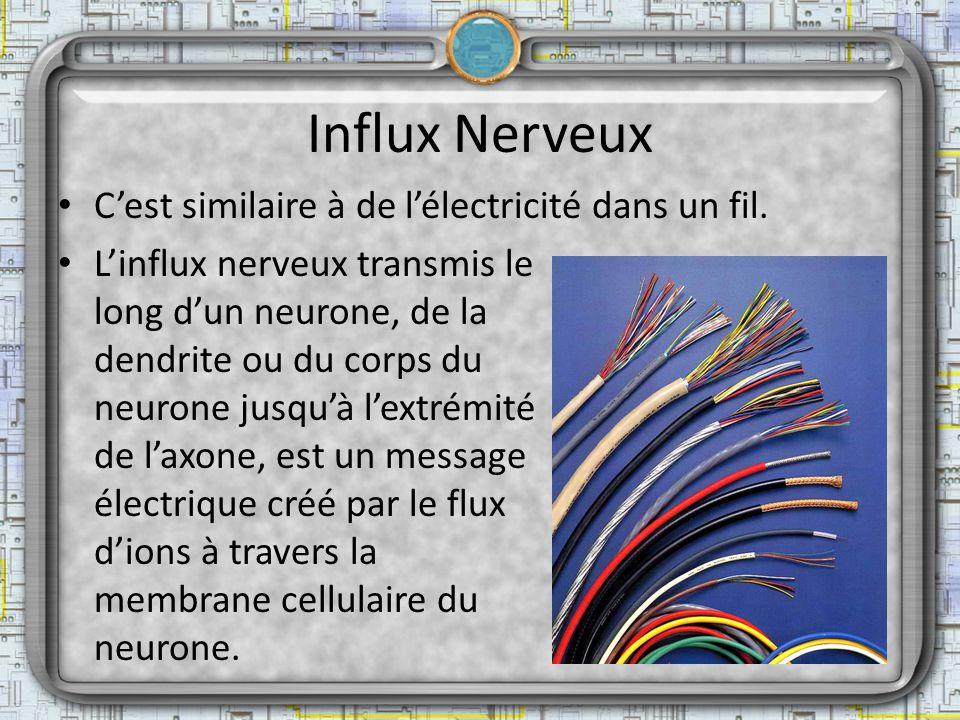 Influx Nerveux C'est similaire à de l'électricité dans un fil.