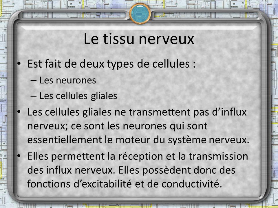 Le tissu nerveux Est fait de deux types de cellules :