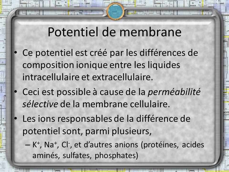 Potentiel de membrane Ce potentiel est créé par les différences de composition ionique entre les liquides intracellulaire et extracellulaire.