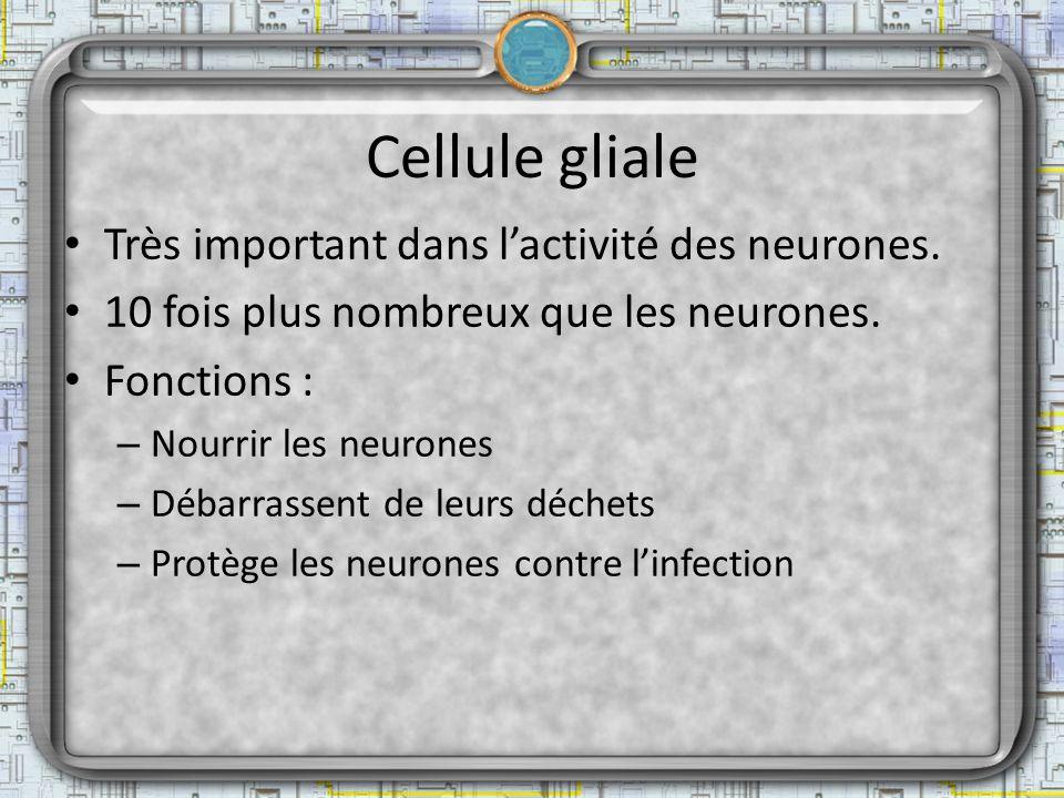 Cellule gliale Très important dans l'activité des neurones.
