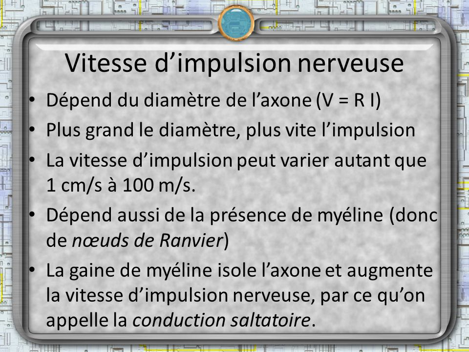 Vitesse d'impulsion nerveuse