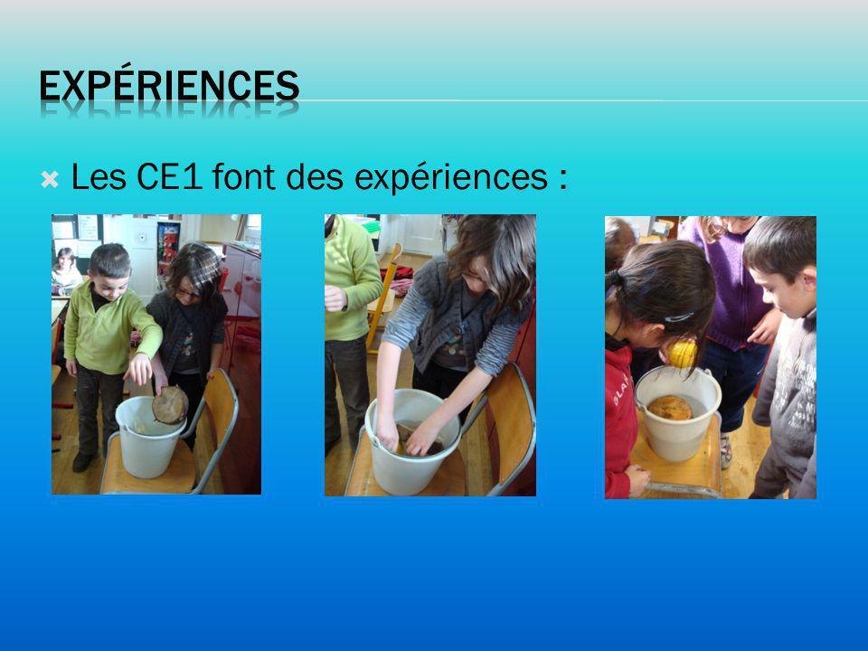Expériences Les CE1 font des expériences :