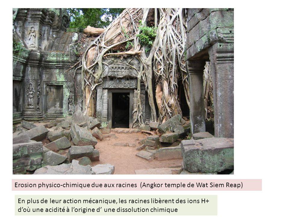 Erosion physico-chimique due aux racines (Angkor temple de Wat Siem Reap)