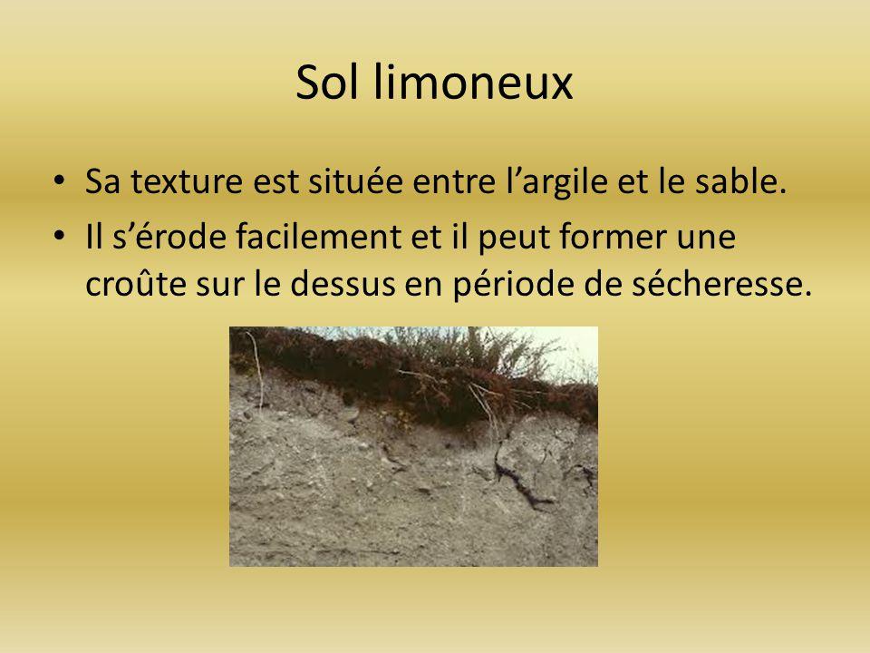 Sol limoneux Sa texture est située entre l'argile et le sable.