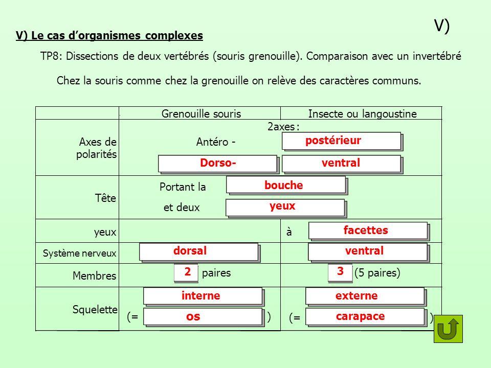 V) Le cas d'organismes complexes