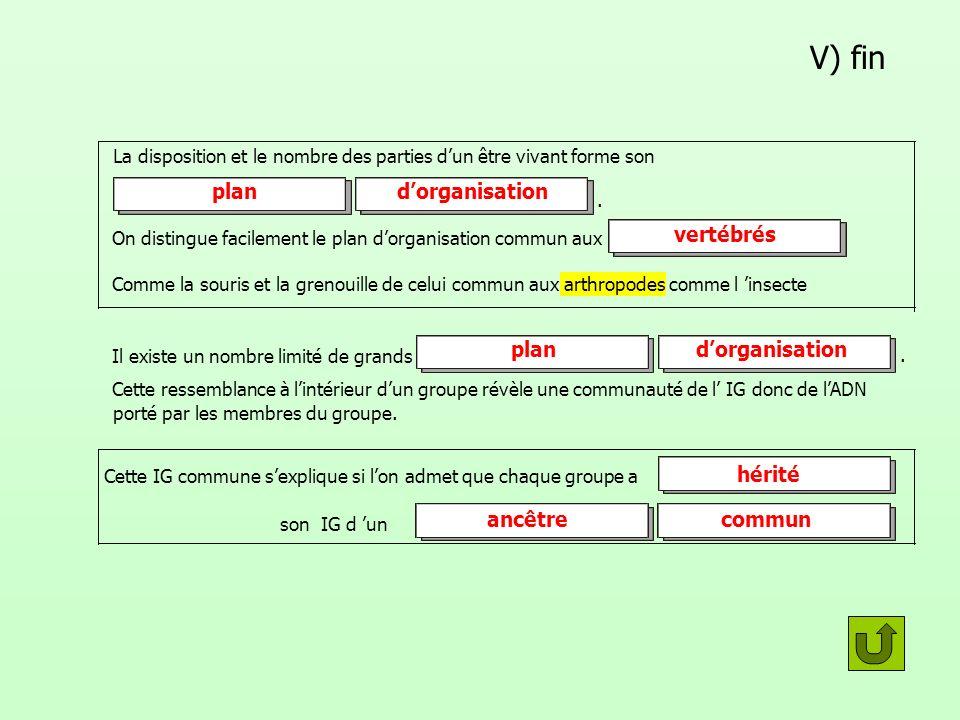 V) fin plan d'organisation vertébrés plan d'organisation hérité