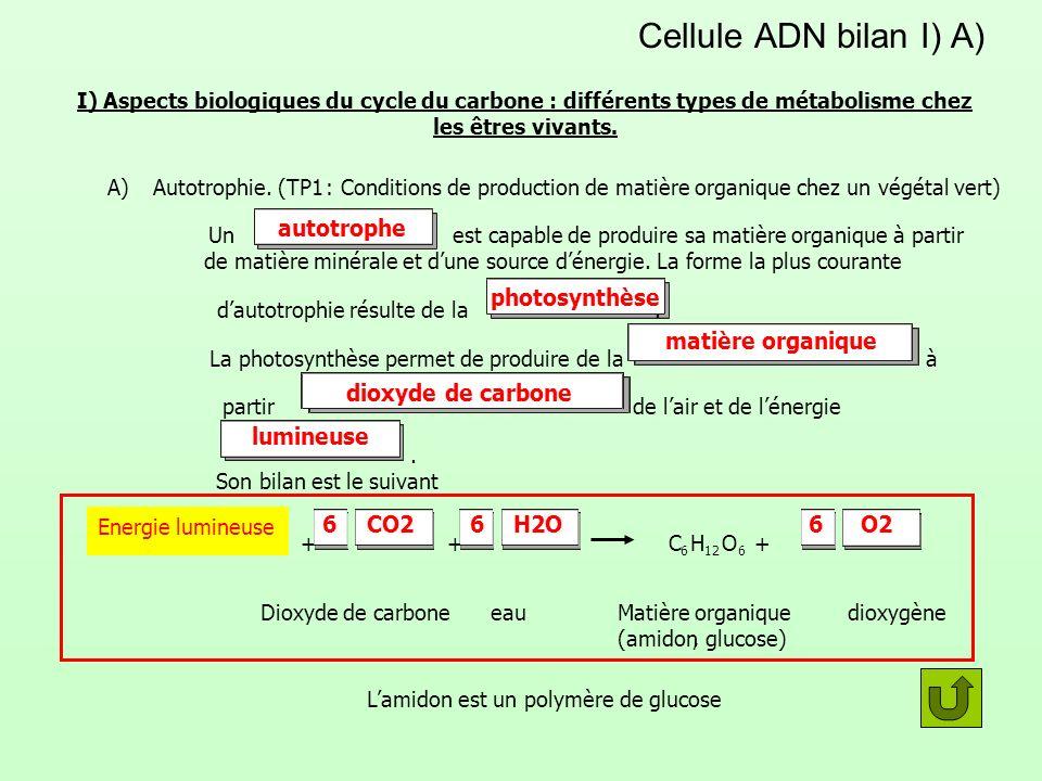 Cellule ADN bilan I) A) autotrophe photosynthèse matière organique