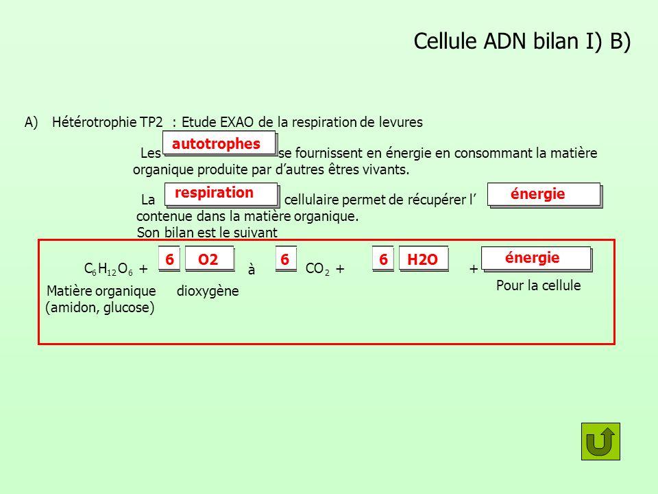 Cellule ADN bilan I) B) autotrophes respiration énergie 6 O2 6 6 H2O
