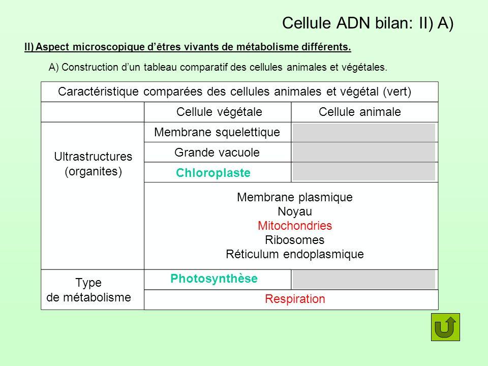 Cellule ADN bilan: II) A)