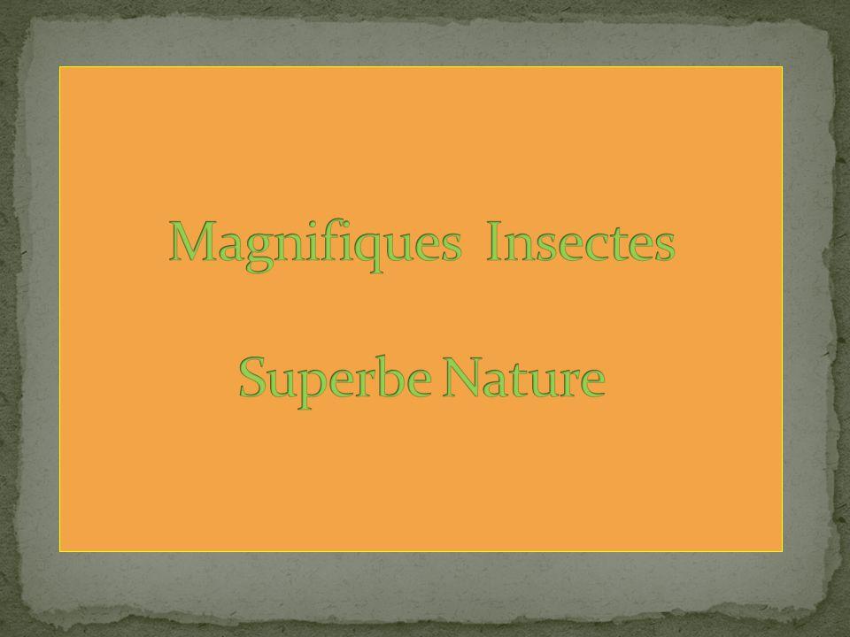 Magnifiques Insectes Superbe Nature