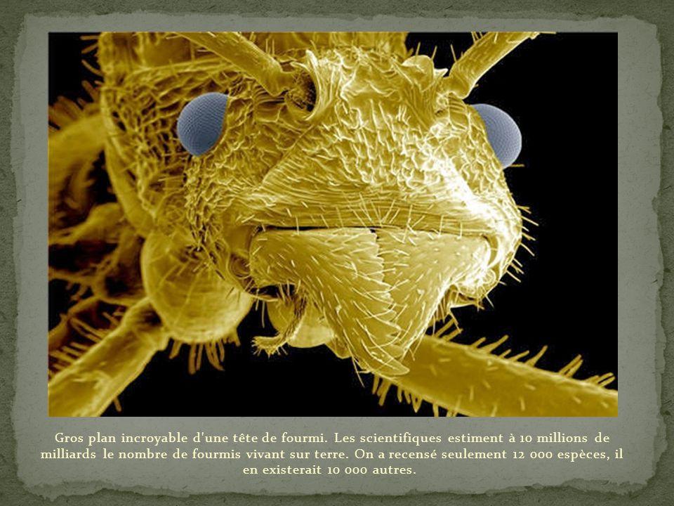Gros plan incroyable d une tête de fourmi
