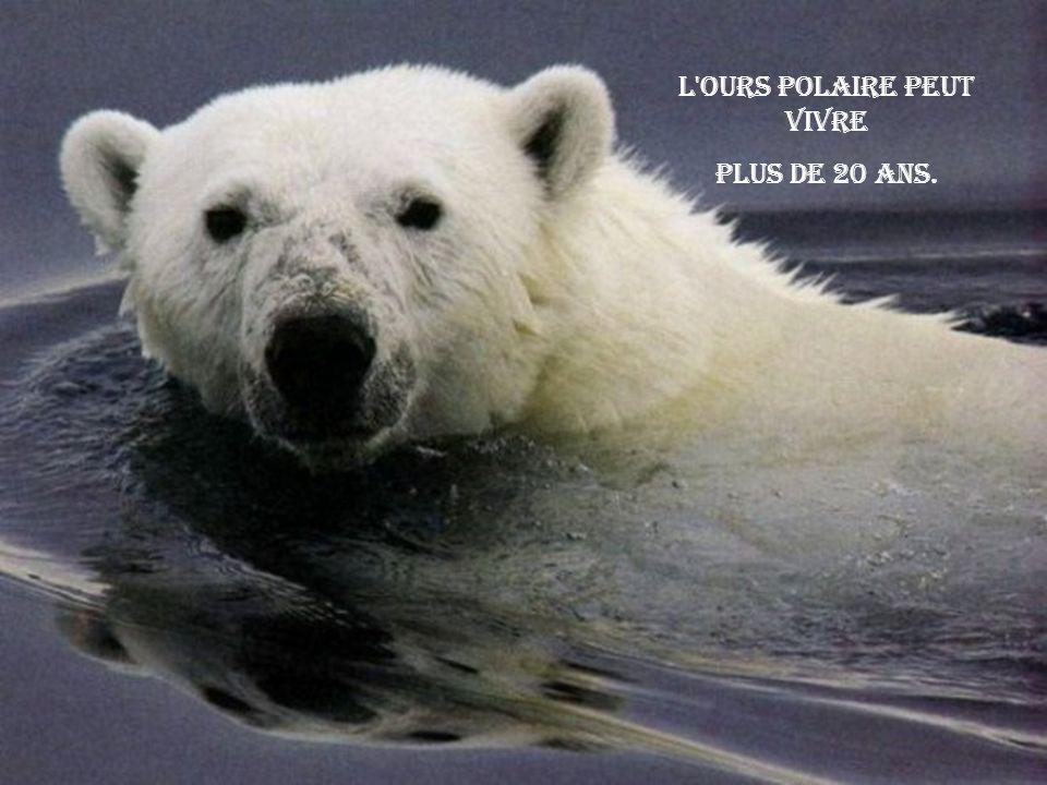 L ours polaire peut vivre