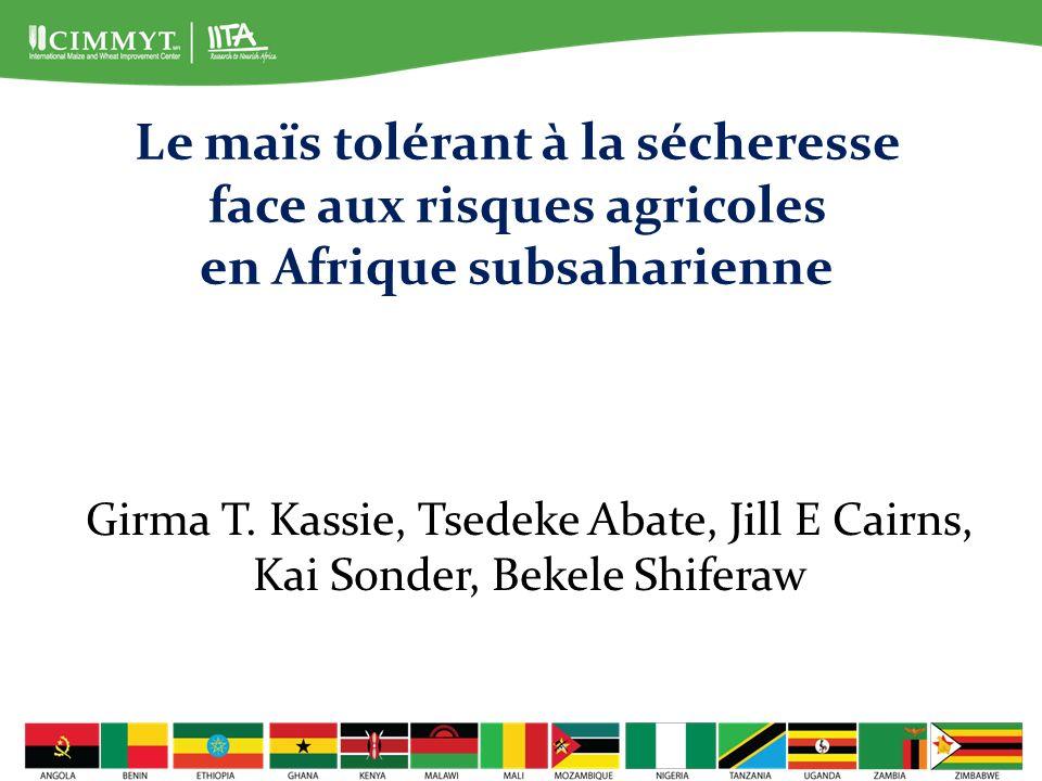 Le maïs tolérant à la sécheresse face aux risques agricoles en Afrique subsaharienne