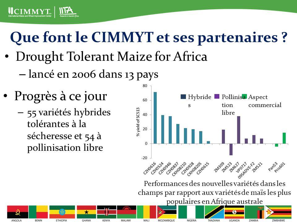 Que font le CIMMYT et ses partenaires
