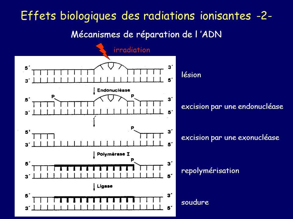 Effets biologiques des radiations ionisantes -2-