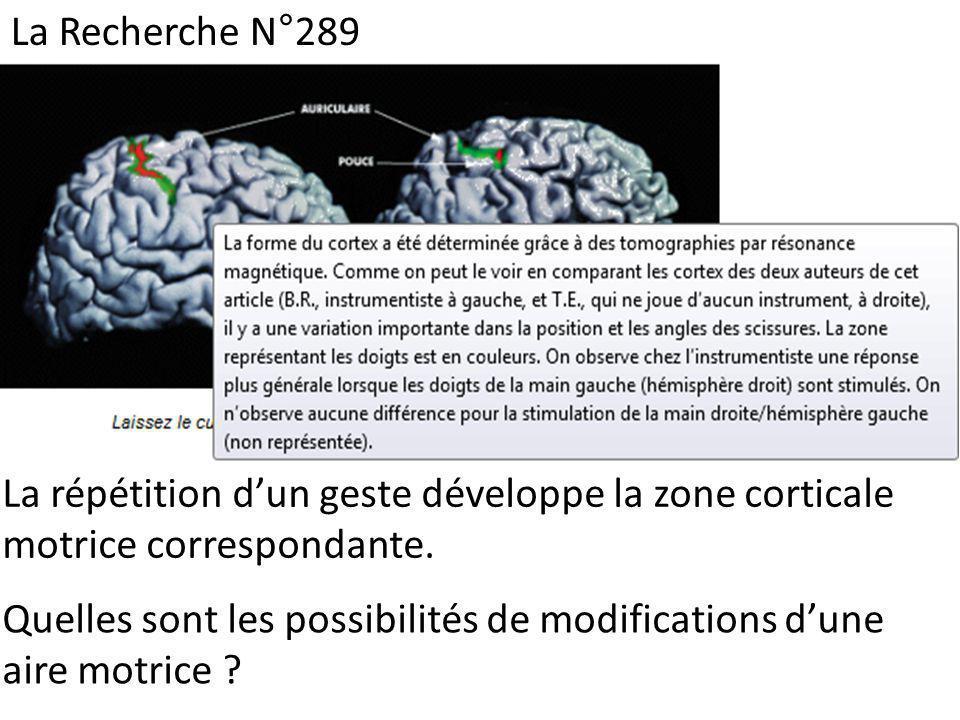 La Recherche N°289 La répétition d'un geste développe la zone corticale motrice correspondante.